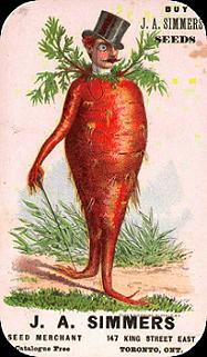 Carrot Guy